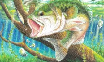 Florida Fish and Wildlife Conservation Commission art contest state fish