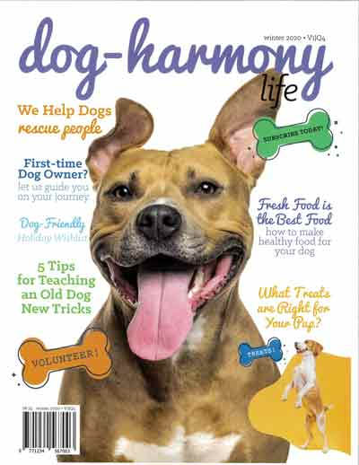 dog harmony magazine