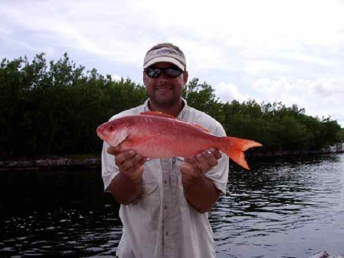 vermillion-snapper florida