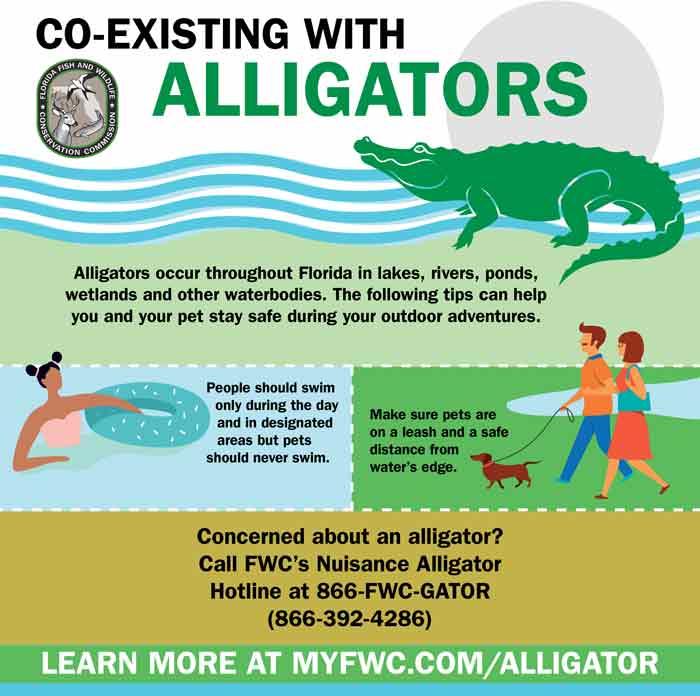 florida alligator pet safety
