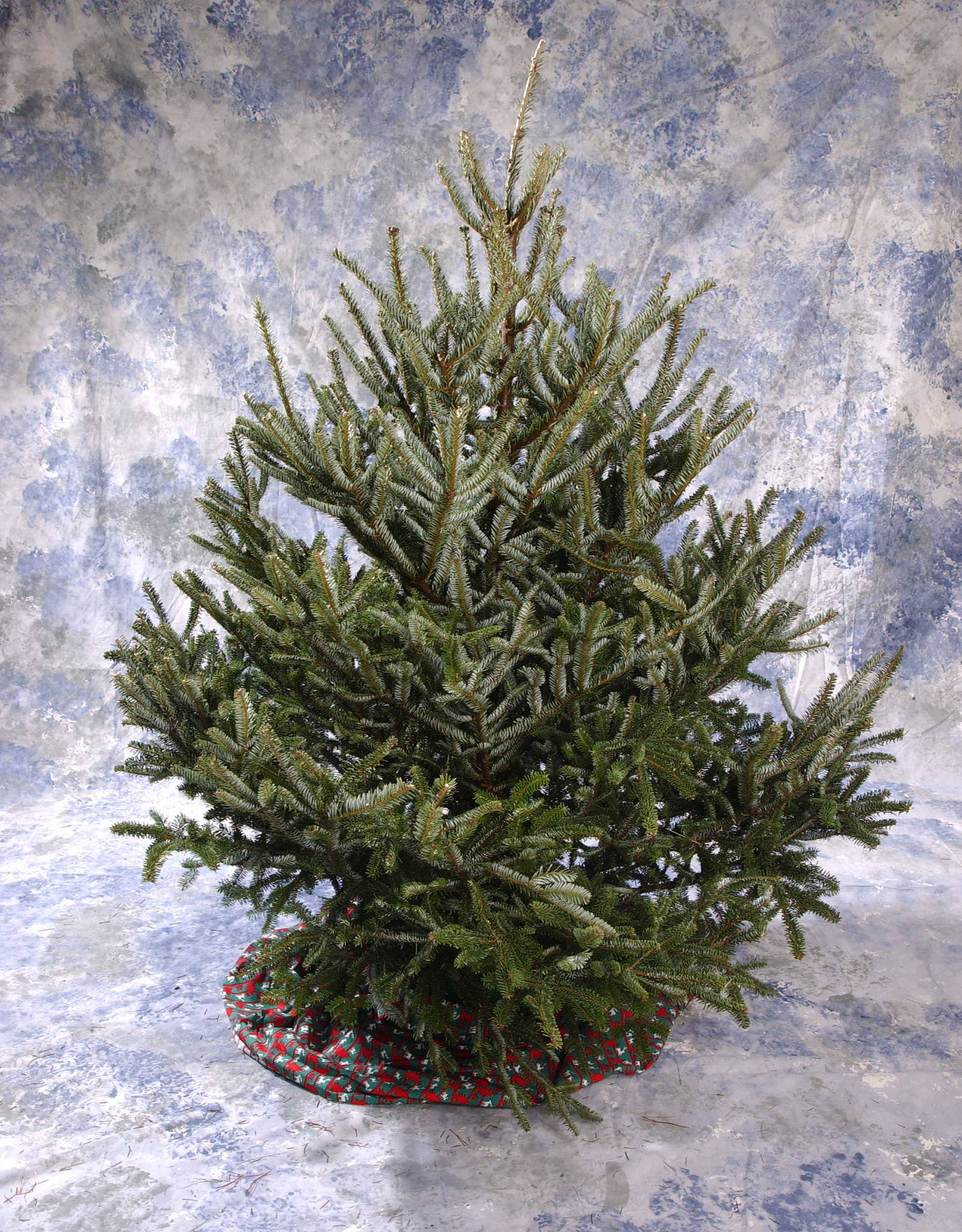 Treat your Christmas tree to vodka? Only if you want to waste it
