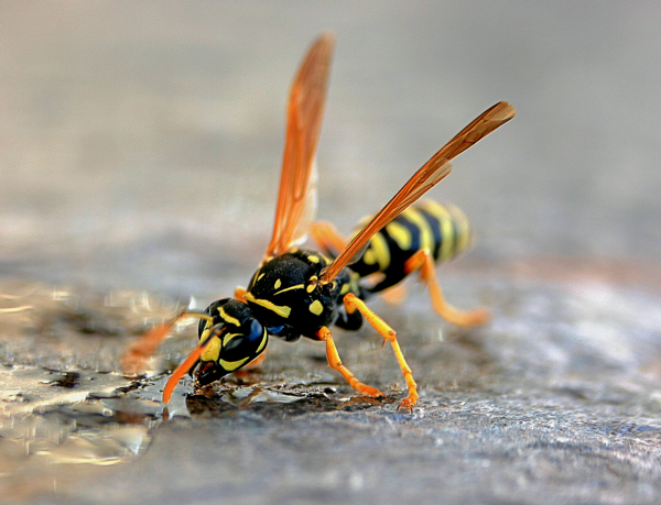 Yellowjackets buzzed to the top of most popular gardening stories of 2018