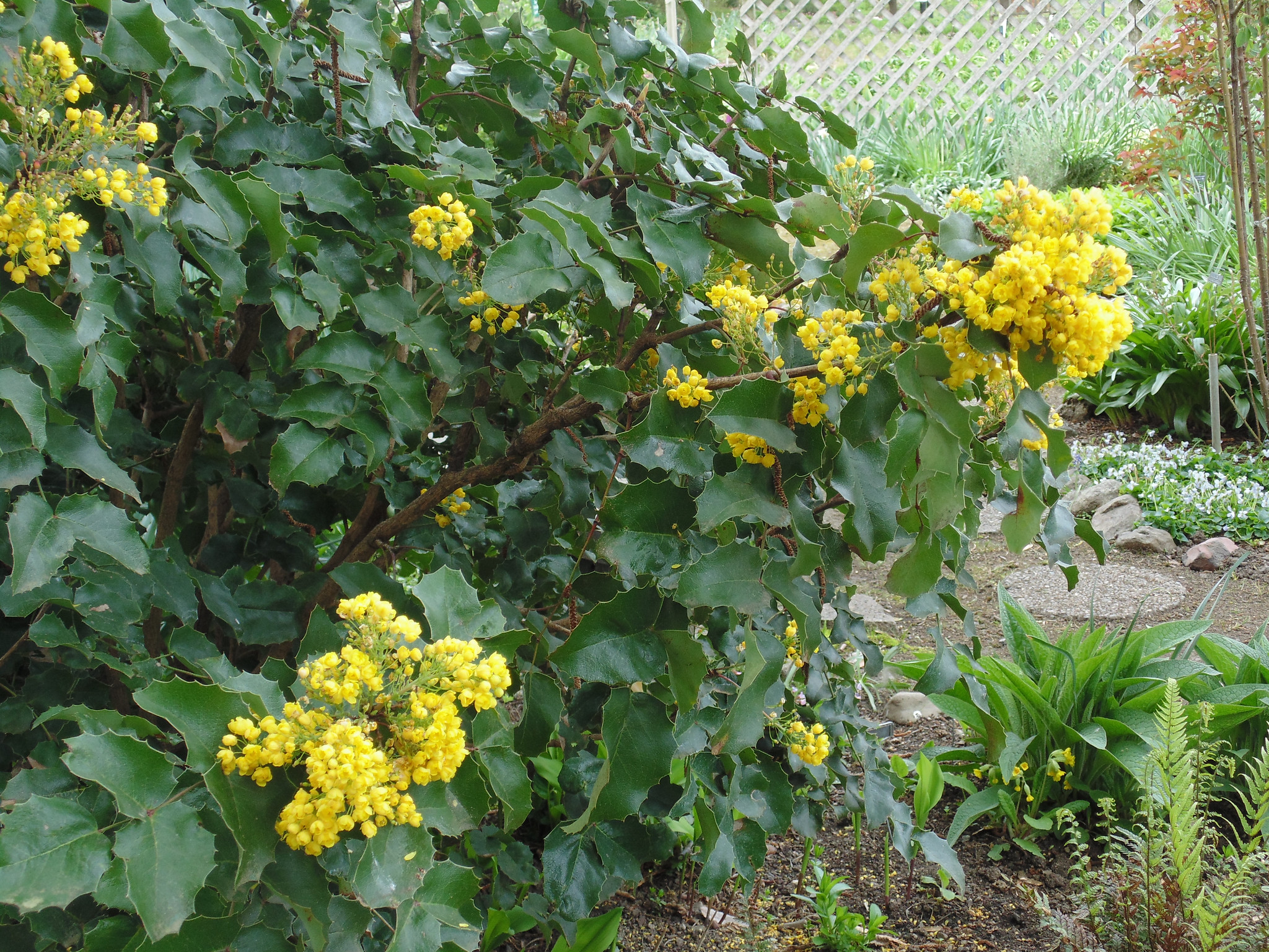 Popularity of native plants on the rise