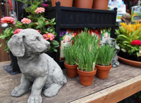 Pet-safe gardening