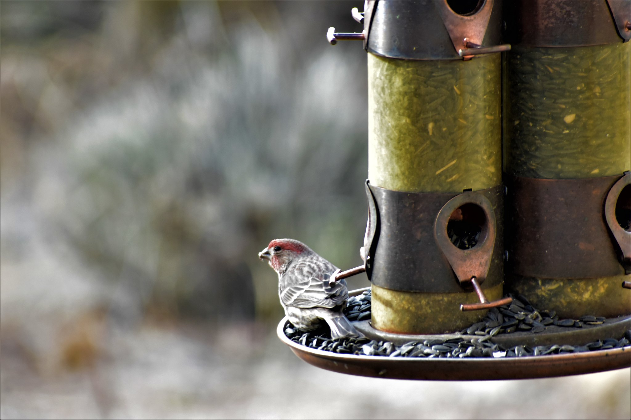 Put out the welcome mat for birds in winter