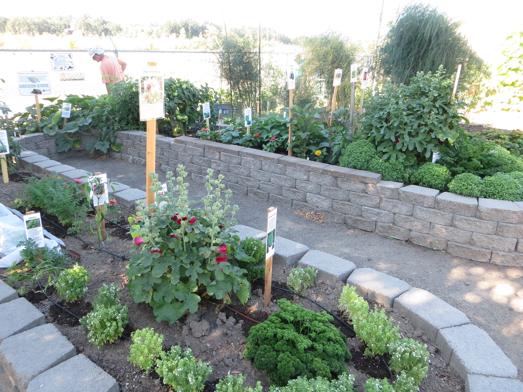 Study shows some urban gardens contain too much organic matter