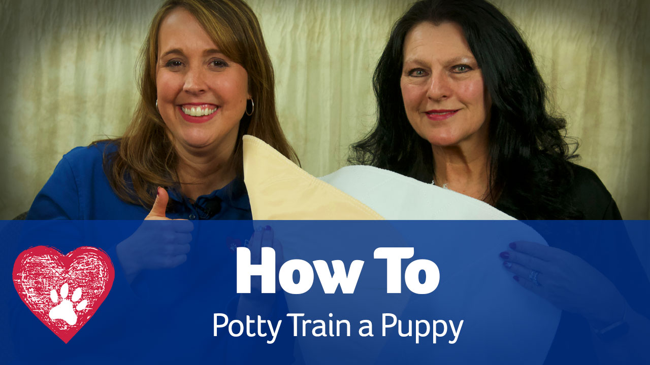 potty train a puppy