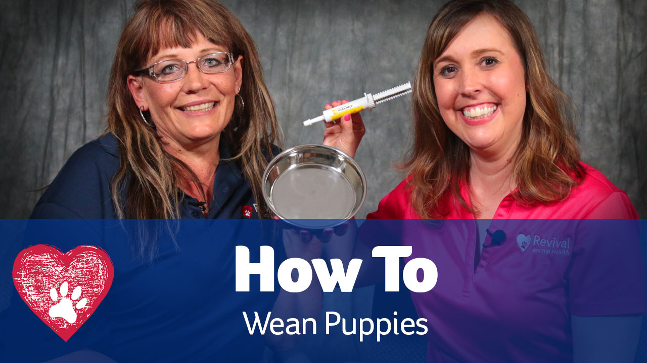 weaning puppies