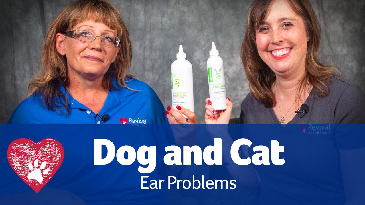 Dog Ear Problems