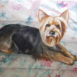 "yorkie 24"" X 30"" Watercolor on paper"