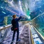 Aquarium of the Bay San Francisco with Kids