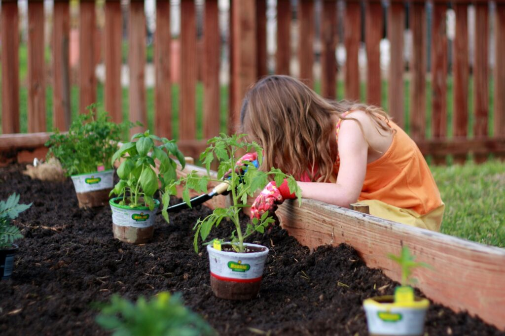 Young girl works on planting plants in raised bed garden. Use this summer to plant your own container garden or raised bed garden full of your favorite veggies, fruits, lettuces and herbs. Then once it grows, use your new ingredients in your family's favorite recipes.
