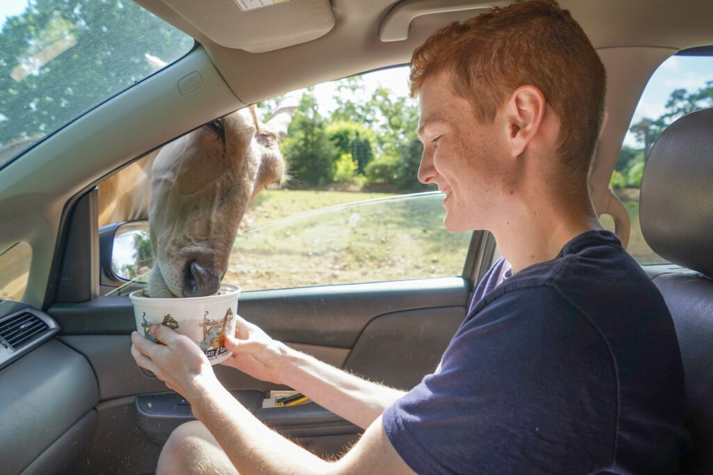 Teen boy feeds animal from vehicle at the Lazy 5 Ranch. One way to see some animals super safely is to head to a drive-through Safari type park. We have one called Lazy 5 Ranch about an hour away. You can even feed some of the animals right from your window if you are brave enough!