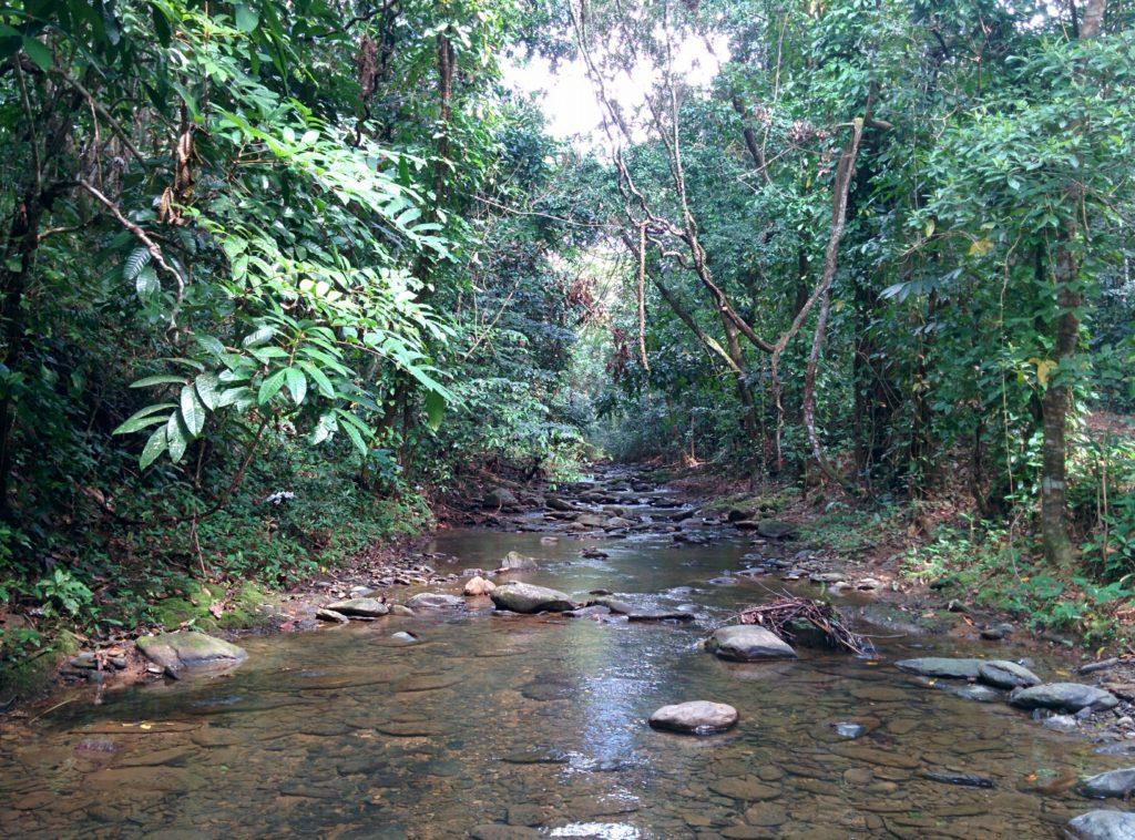 El Cedro River
