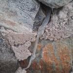 photo snake skin