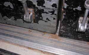 scorpions entering a building under a door