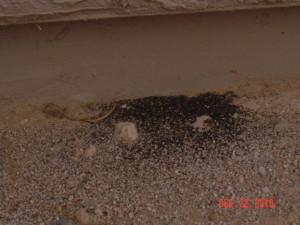 poop DSC03764