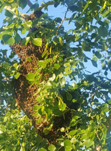 Yikes beehive