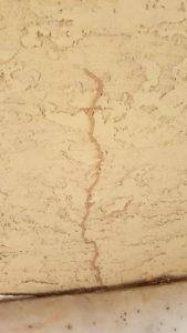 Termites tube on block wall.