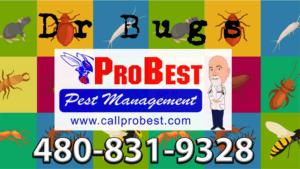 ProBest name change