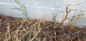 Sub Termites
