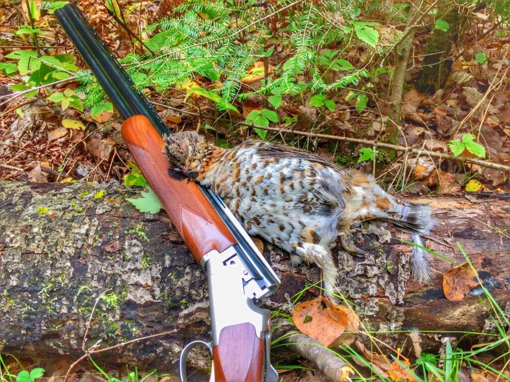 A ruffed grouse and shotgun