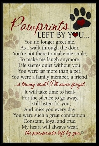 Pawprints left by you by Teri Harrison