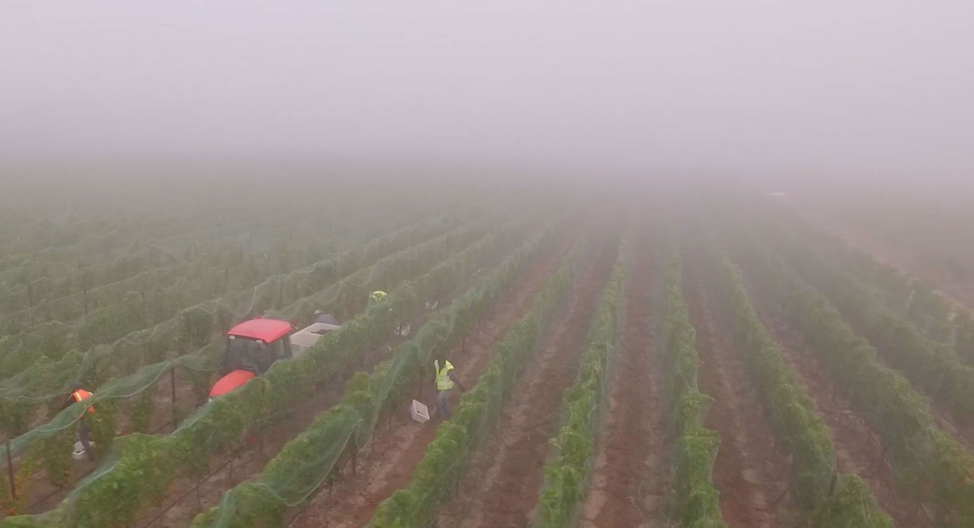 Harvest Low Drone Fog