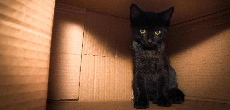 Adopt a cat Victoria County SPCA