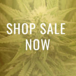 TSC Novelties Seeds for Sale