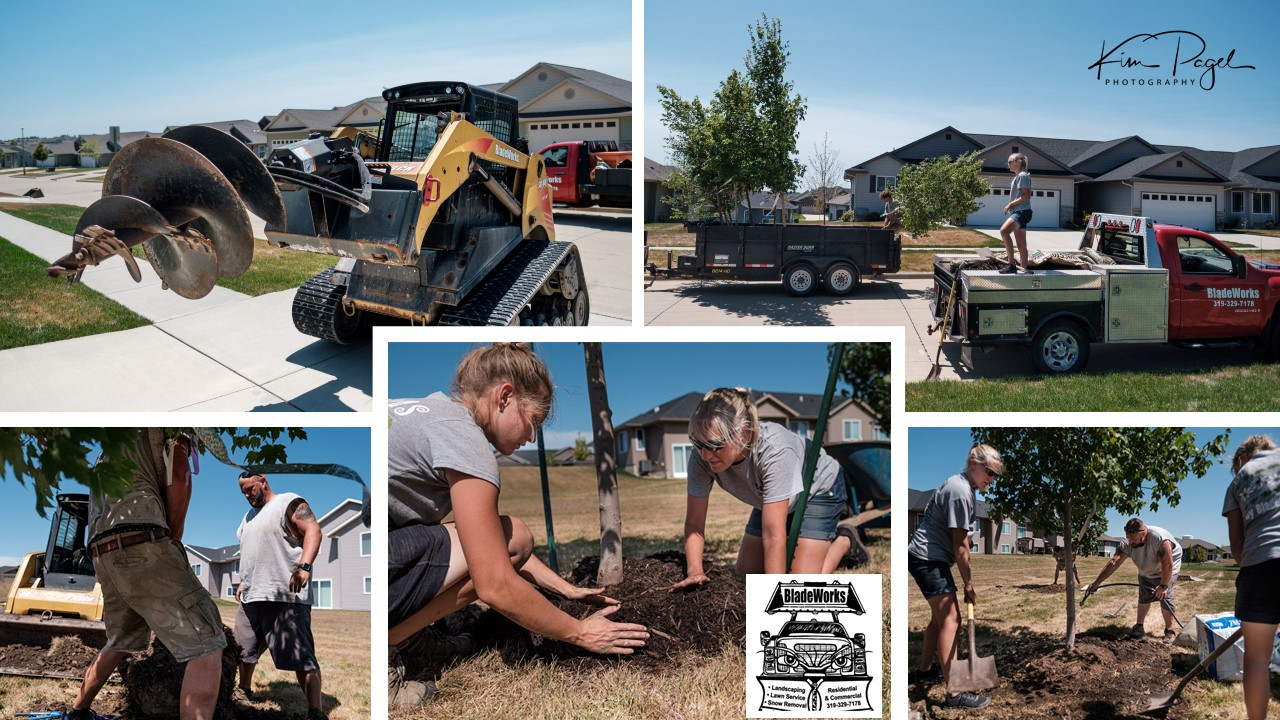 Tree Planting Marion