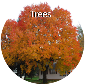 Selecting Trees for Iowa