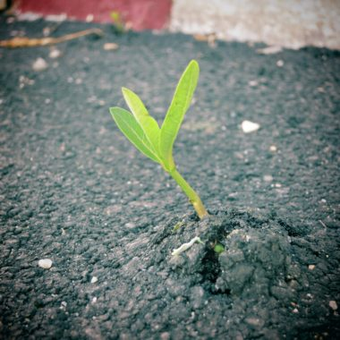 A young plant growing through concrete pavement.