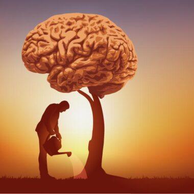 Cultivate brain