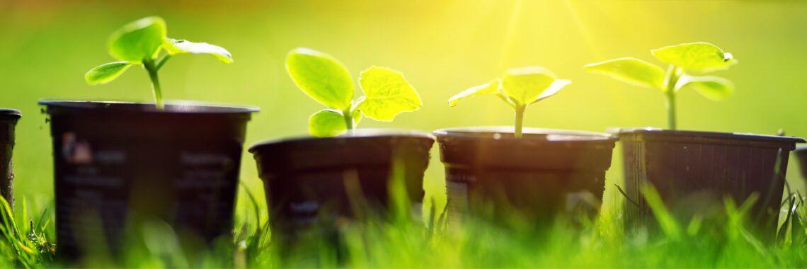 Cultivate seedlings