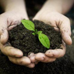 Soils & Compost