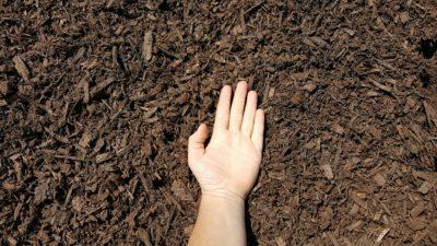 Dark Brown Mulch Hand