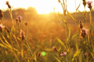 Solstice on the Prairie: A Celebration of Mindfulness and Connection. @ Spring Creek Prairie
