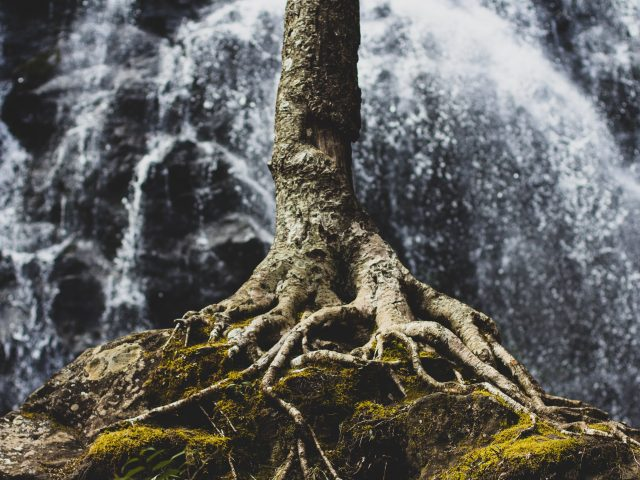 Michelle Bauer ~ What It Means to Be Rooted and Established in God's Love