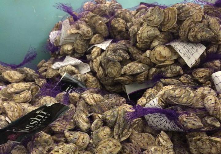 Nomiya Oceanwise oysters