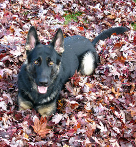 photo of Dog in the Leaves