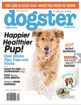 Dogster Magazine Feb-Mar 2019 Cover