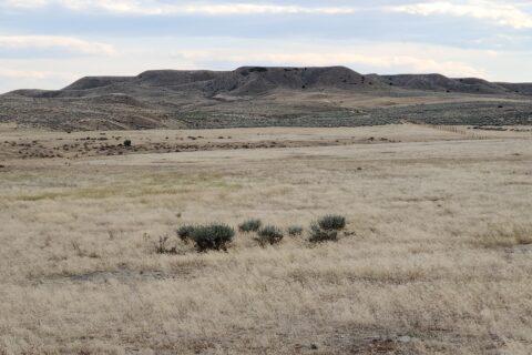sage hill 1