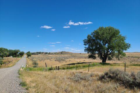 sage hill 3
