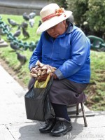 Napping bird seed seller, Arequipa, Peru photo