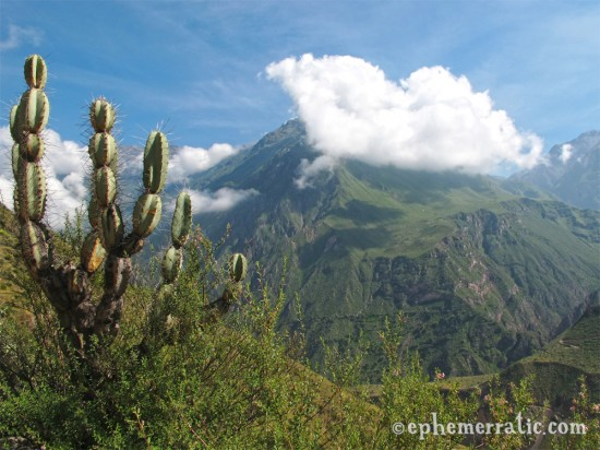 Cactus and cloud view, Colca Canyon, Peru photo