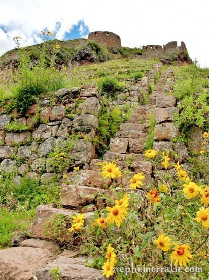 Beautiful every step of the way, Pisac ruins, Peru photo