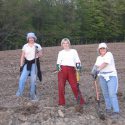 The ladies planting the orchard