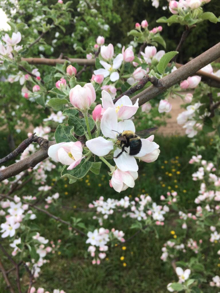 May 25 - bees