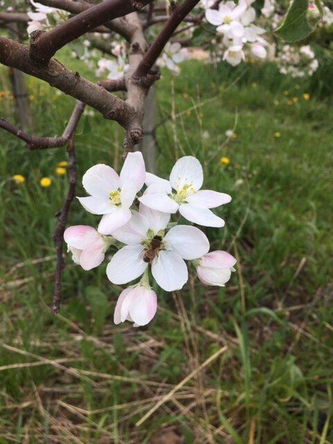 May 25 - bees.4